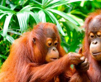Borneo Highlights
