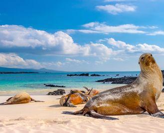 Signature Galapagos