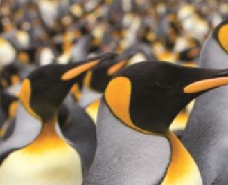 Antarctica Wildlife: Falklands, South Georgia And The Antarctic Peninsula
