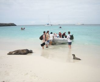 Galapagos Hawk: Peru And Galapagos