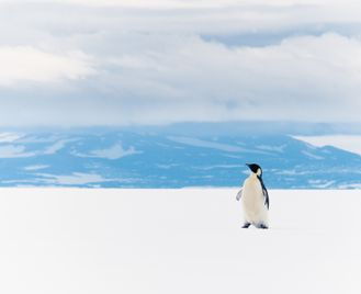 Antarctica: Ross Sea And The Far Side
