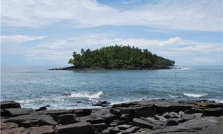 Coq Of The Rock: Trailblazing The Guianas