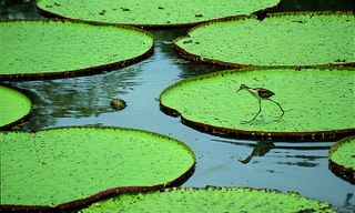 Brazil Wildlife: Iguazu, Pantanal And Amazon