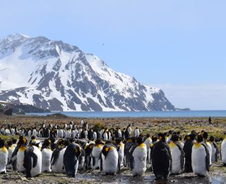 Chile And The Falklands Wildlife Holiday