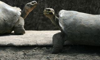 Value Galapagos: Budget Cruising In The Enchanted Islands