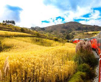 Picaflor: Ecuador On Track