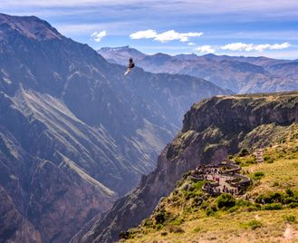 Condor: Peru In Depth