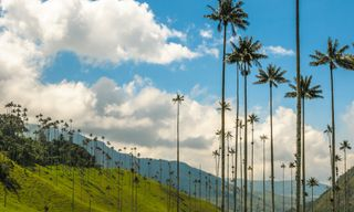 Weaverbird: Spirit Of Colombia