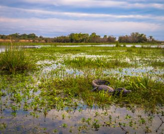 Argentina Wildlife: Tropical Wetlands And Patagonia