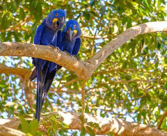 Trogon: Natural Brazil