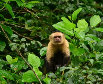 Signature Costa Rica: Wildlife And Volcanoes