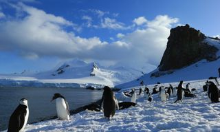 Antarctica: In Search Of The Emperor Penguin