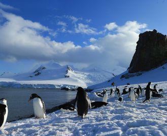 Antarctica: In Search Of The Emperor Penguin