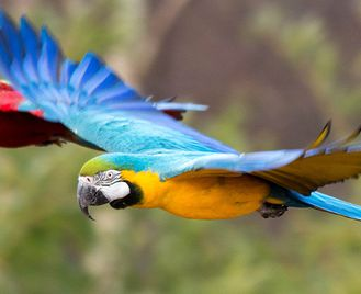 Peru Birdlife: Machu Picchu To Pristine Amazon