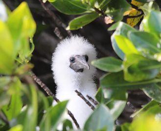 Value Galapagos And Peru