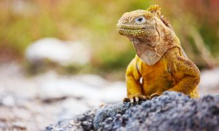 Ecuador's Andes And Galapagos Islands Hop