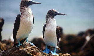 Paloma: Andean Ecuador And Land Based Galapagos