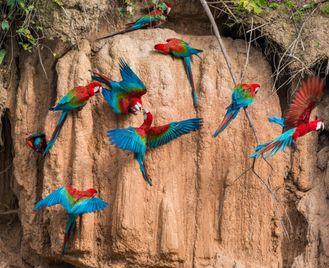 Wildlife Peru And Galapagos