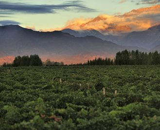 Food And Wine: Vineyards Of Argentina And Chile
