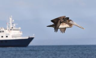 Expedition Cruise: Panama, The Canal And Costa Rica