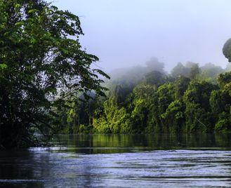 Discovering The Hidden Guianas