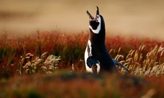 Falklands Cruise: Wildlife Outposts Of The South Atlantic