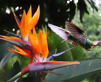Tanager: Flora And Fauna Of Costa Rica