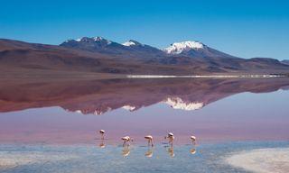 Zampullin: Vistas Of Bolivia