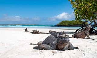 Private Galapagos: Santa Cruz And Isabela Islands