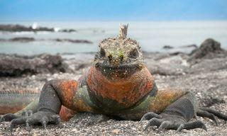 Private Galapagos: Santa Cruz And Isabela Islands