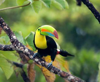 Costa Rica Walks and Wildlife