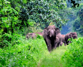 Southern Spice - Family holiday in Kerala