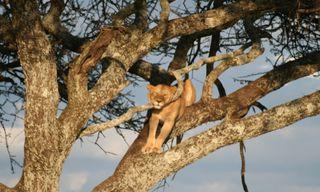 Tanzania Safari - Maasai Adventure