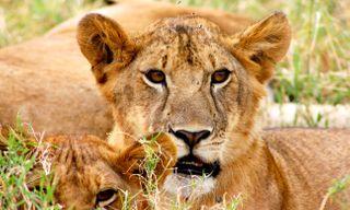 Hakuna Matata - Family Tanzania Safari