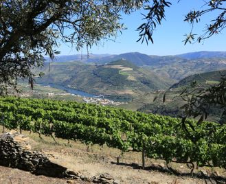 Walking in the Minho and Douro Valley