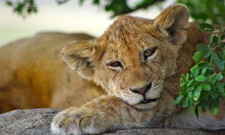 Tanzania's Serengeti and Classic Wildlife Safari
