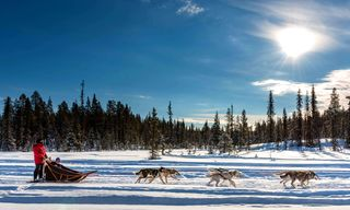 Lapland Dog Sled Beginner's Week