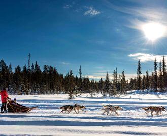 Lapland Dog Sled Beginner's Week