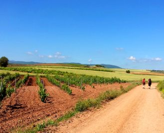 Self-Guided French Way: Logrono to Leon