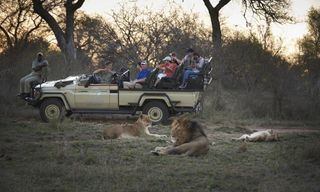 Cape Town & Kruger Safari - 11 Days From £2549