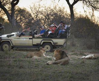 Cape Town & Kruger Safari