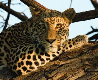 Delta Mobile Safari & Victoria Falls - 14 days from £3499 inc flights