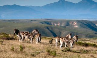 Cape Town and The Garden Route & Gondwana Safari - 15 days From £2699 inc flights