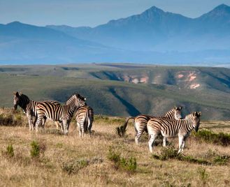 Cape Town and The Garden Route & Gondwana Safari - 15 days From £2899 inc flights