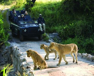 Cape Town and The Garden Route & Kruger Safari - 17 days From £3149 inc flights