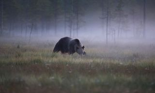 Bear and Bird Watching in Finland