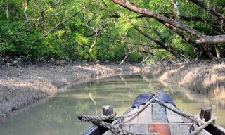 Sundarbans Safari (8 Days)