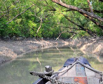 Sundarbans Safari (8 Days)