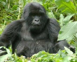 Nairobi To Nairobi (19 Days) Gorillas & Gameparks