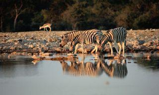 Victoria Falls To Johannesburg (40 Days) Deserts & Gameparks